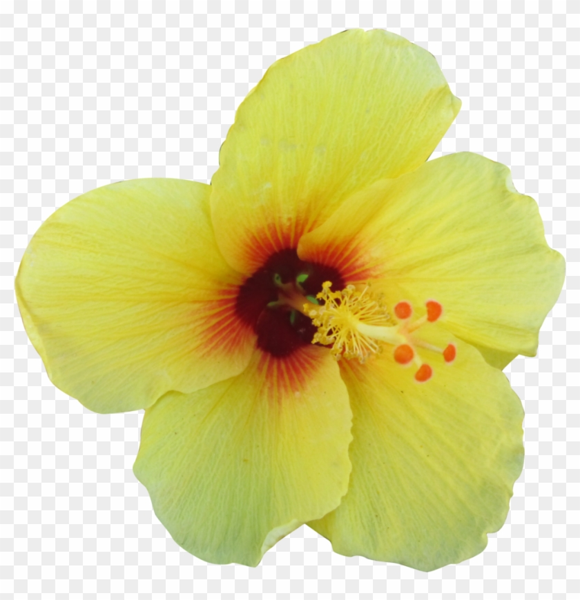 Yellow Tropical Flower Png #288451