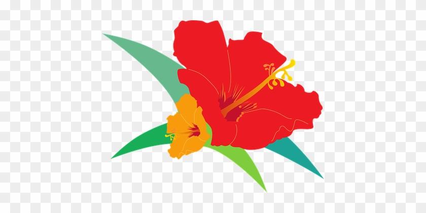 Hibiscus, Bird's Flowers, Red, Orange - Vector Graphics #288862