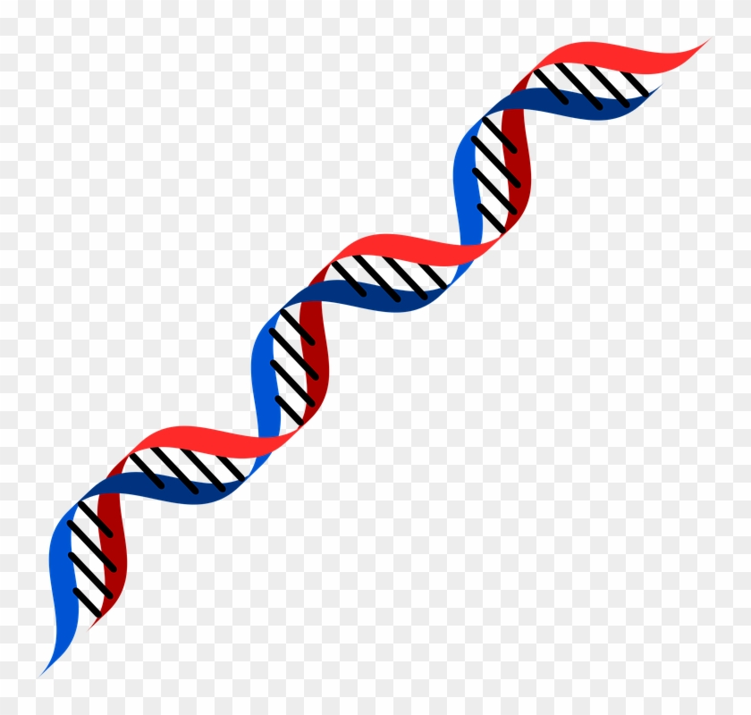 Dna Png - Dna Red And Blue #289060