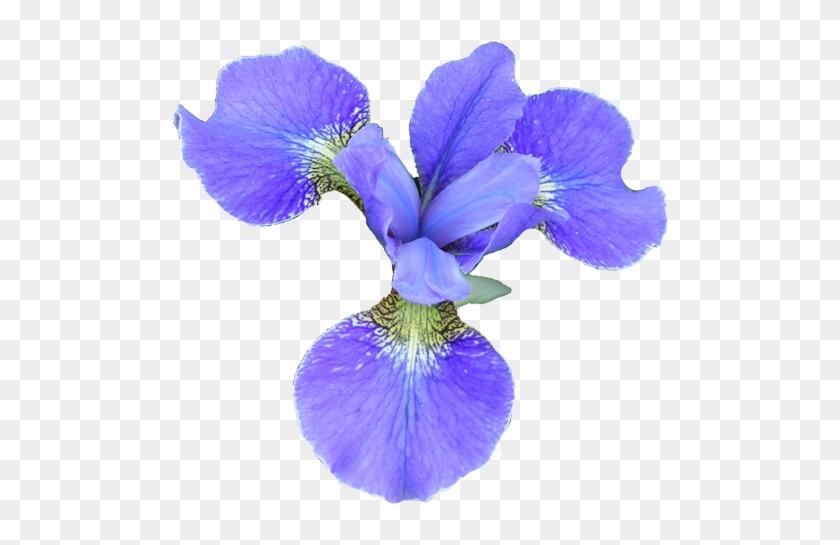 Flower - Flower Clipart Realistic #289257