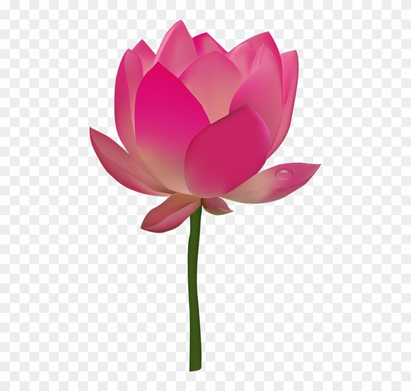Tropical Flowers Clipart 17, - Lotus Flower Transparent #289301