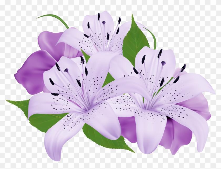 Lopez Flowers Encinitas - Exotic Flower Clip Art #289335