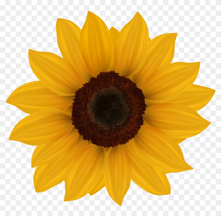 Sunflower Png Clipart Image - Sunflowers On Transparent Background #289332