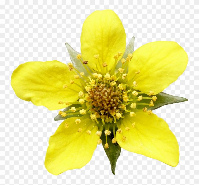 Fleur3 Photogriffon - Png Transparentes Gratuites #289383