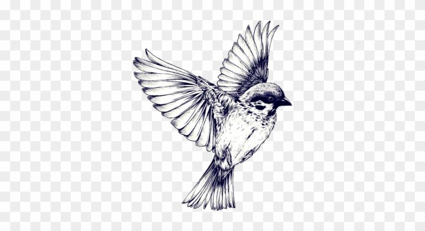 Pajaros Volando Blanco Y Negro - Sparrow Tattoo Realistic #289726
