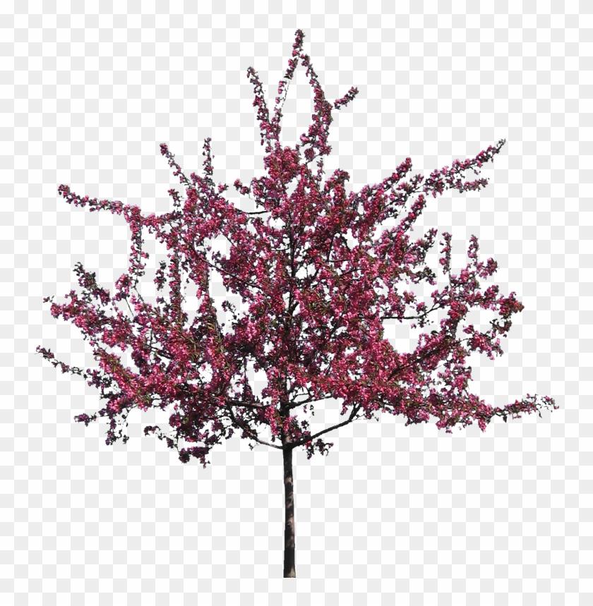 V - 8 - 7 740 - 0 Kbytes, Dvz - Flowering Trees - Crab Apple Tree #289776