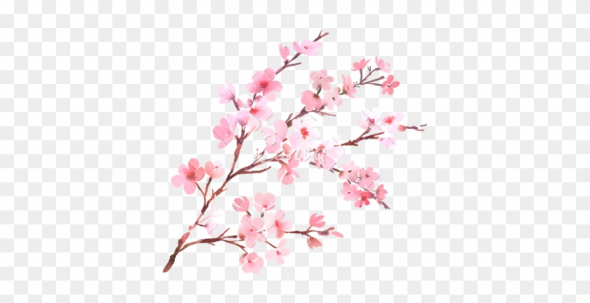 Cherry Blossom Clipart Png Photos Png Images - Cherry Blossom Watercolor Png #289787