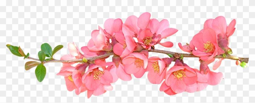 Spring Flowers Transparent Background #289843