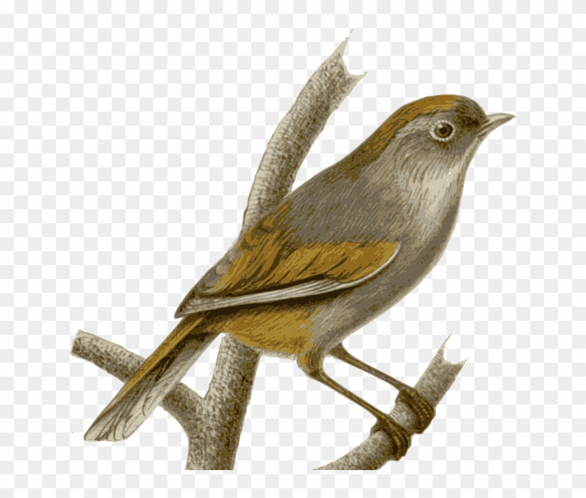 Twig Sparrow, Bird, Feathers, Animal, Brown, Sitting, - Nightingale Png #289852