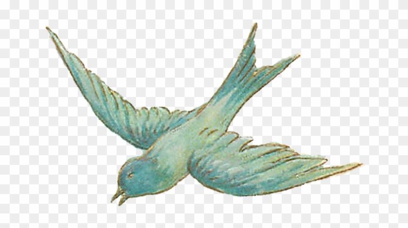 Vintage Bird Illustrations - Vintage Png #289855