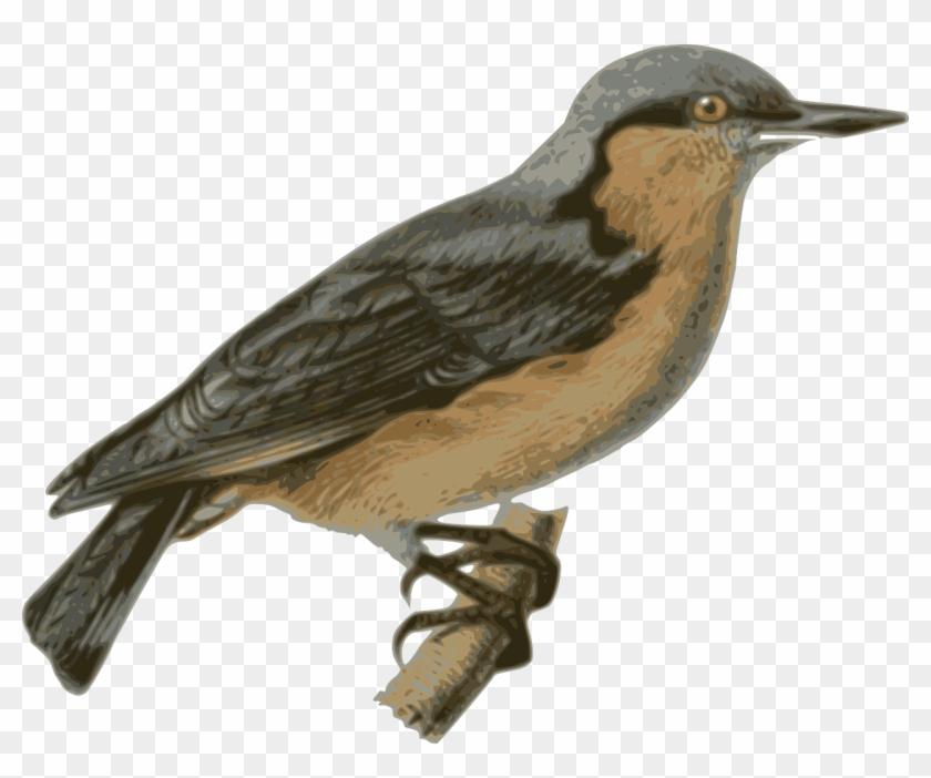 Free Stock Photo - Perched Bird Transparent #289860