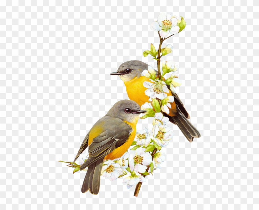 Apricot Branches Of Small Yellow Bird - Birds Paintings Png #289944