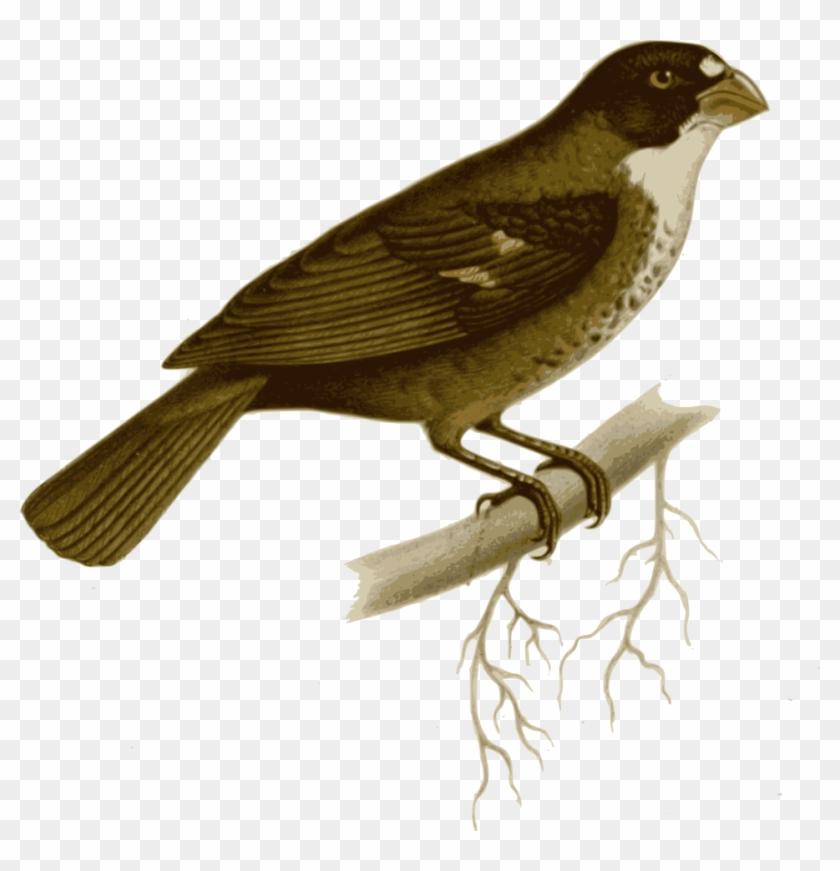 Bird On Branch Clip Art At Clker - Maya Bird Drawing #290057