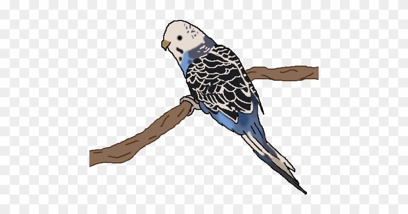 Tutty The Bird - Budgie #290069