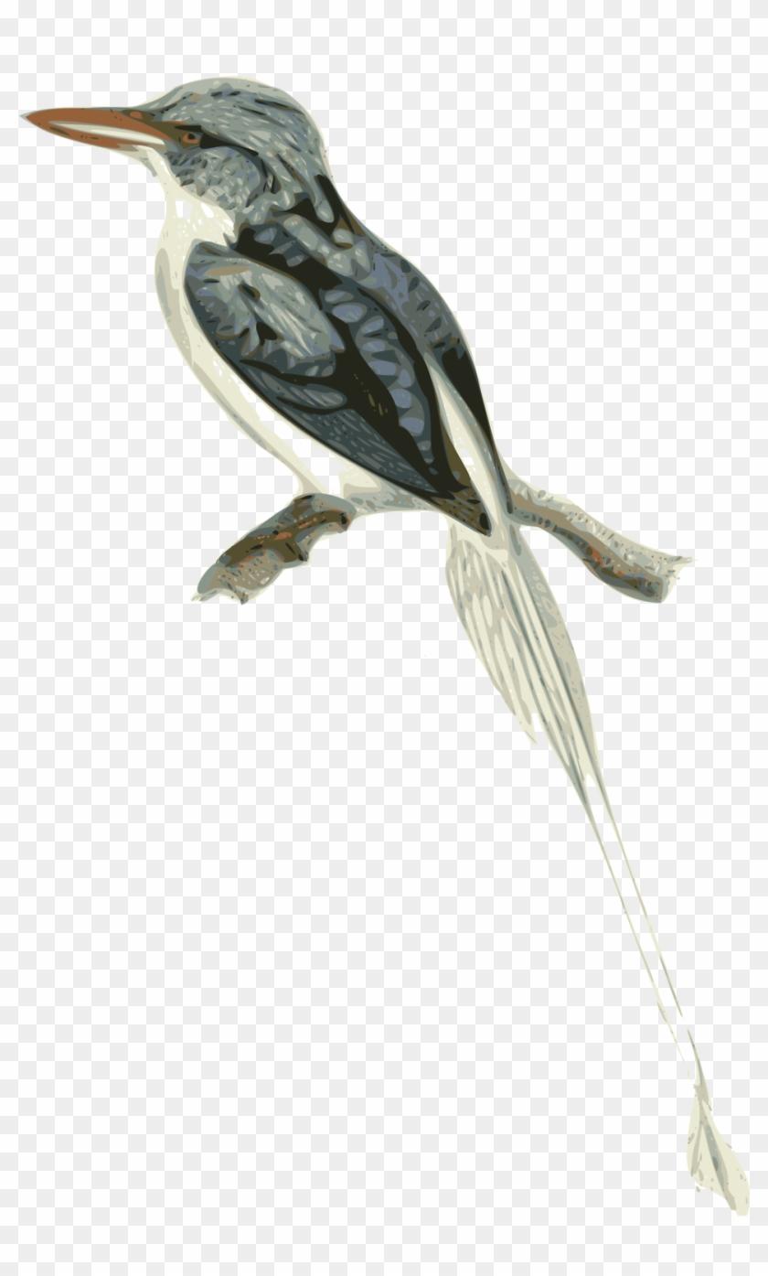 Birds Branch Cliparts 17, Buy Clip Art - Transparent Branch Bird Clipart #290085