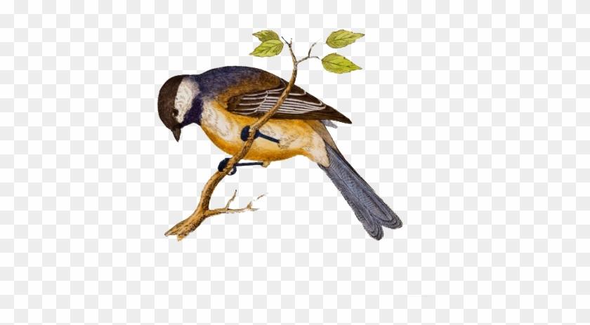 Αποτέλεσμα Εικόνας Για Для Детей - Bird In Ceramic Tile #290122