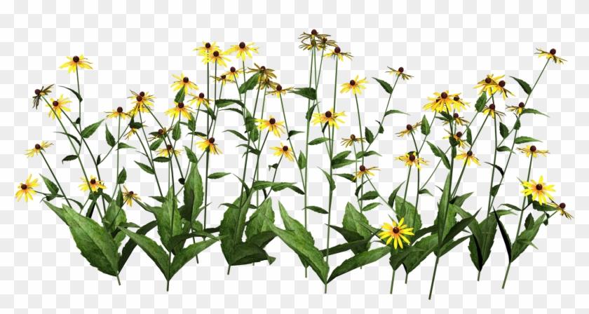 Wildflower Clipart Flowering Plant - New Flowers Baby Onesies #290184
