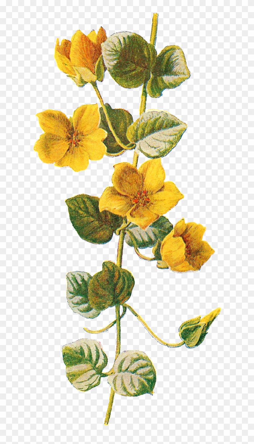 Wildflower Clipart Different Flower - Botanical Flowers Png #290185
