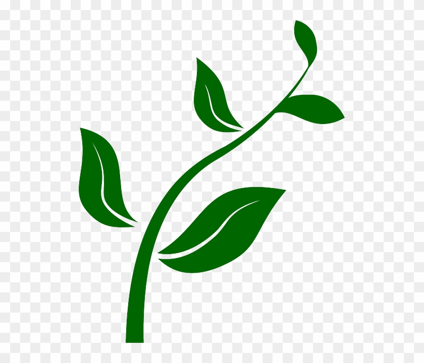 From Seed To Plant Clip Art - Growing Plant Clip Art #290221