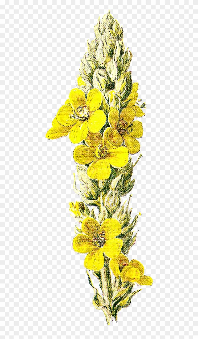 Wildflower Clipart - Clipground - Bouquet #290287