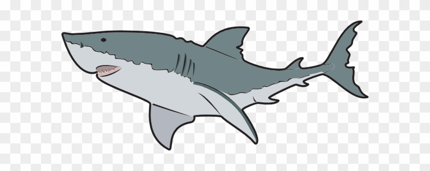 Animal, En, Fish, Ocean, Ocean Animals - Great White Shark Mugs #290458
