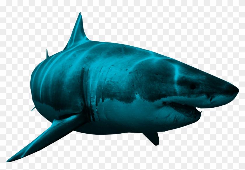 Shark Png - Shark Png #290511