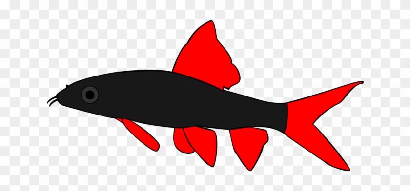 Rainbow Shark By Ccisnex - Rainbow Shark By Ccisnex #290512