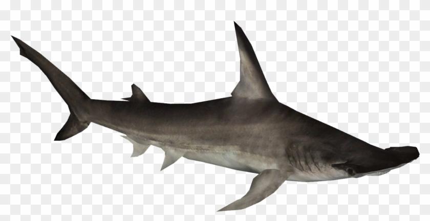 Hammerhead Shark Clipart - Hammerhead Shark Png #290542