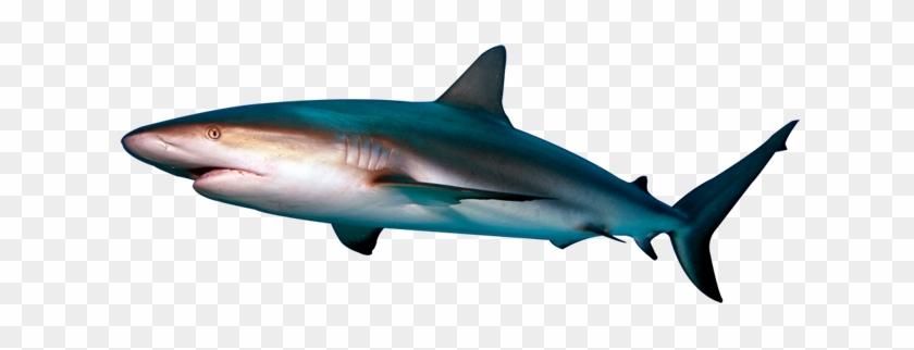 Shark - Shark Png #290619