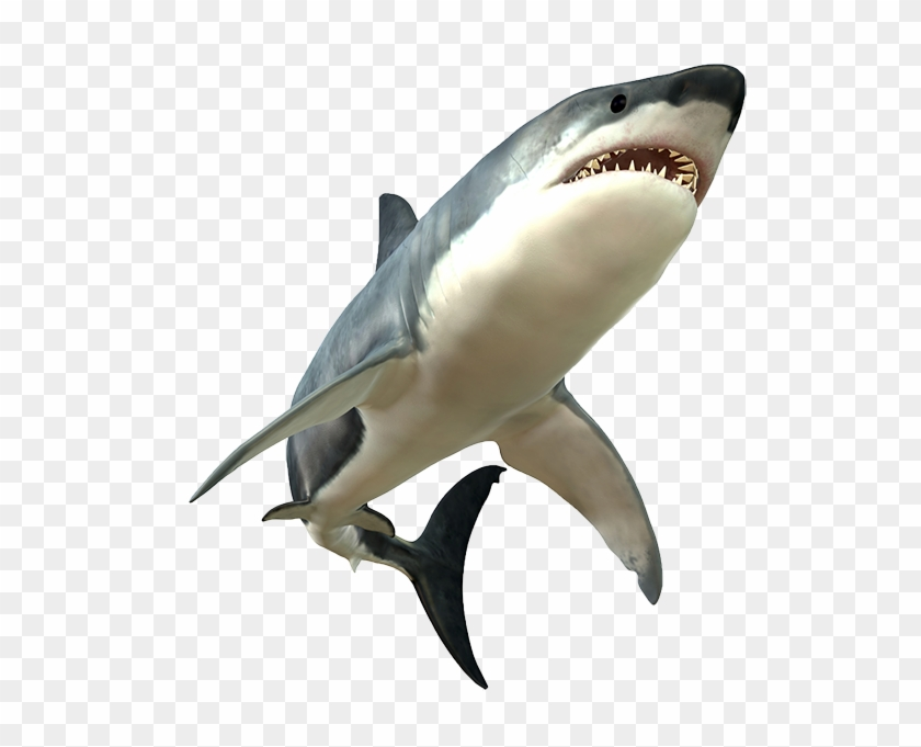 Shark Png Picture - Great White Shark Png #290648