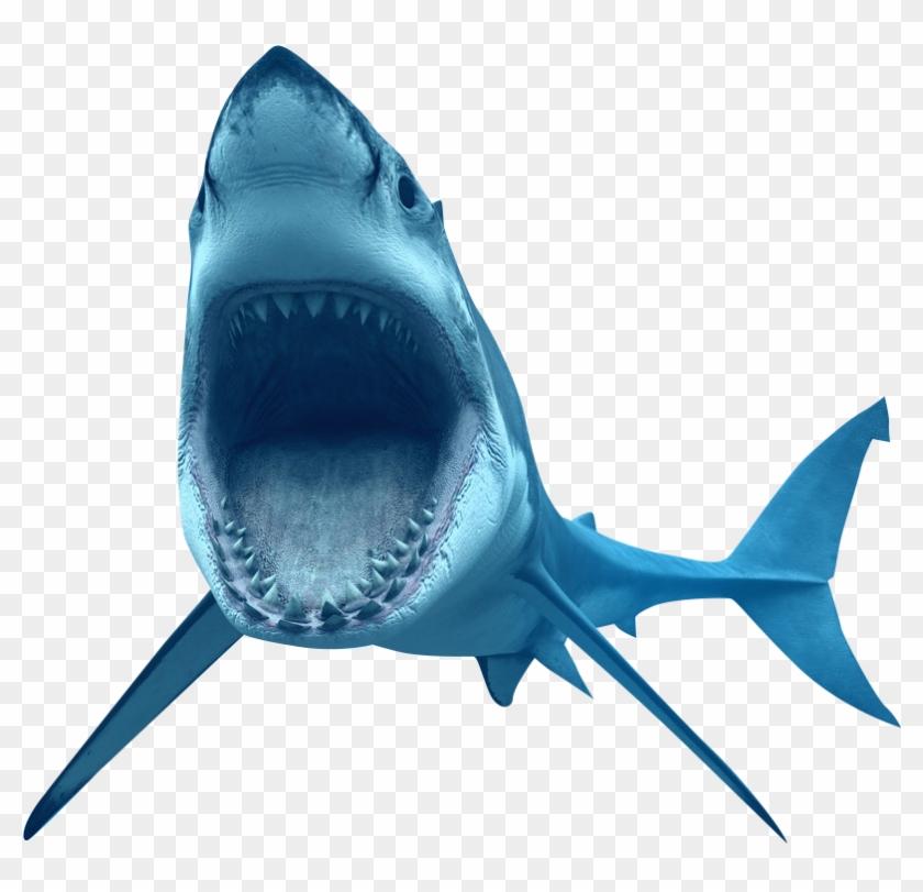 Great White Shark Clip Art - Great White Shark Clip Art #290808