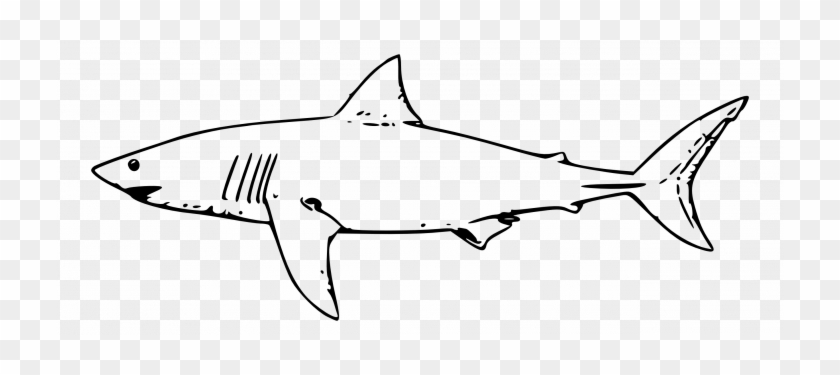 Animals ~ Coloring Pages Animals Whale Shark Drawing - Great White Shark Outline #290856