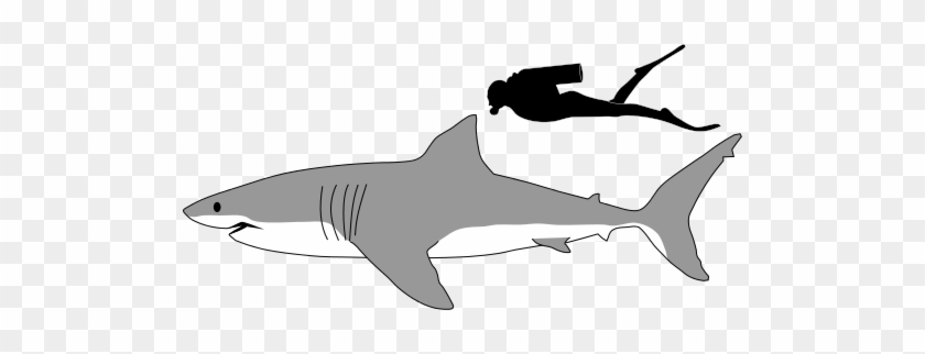 Shark Profile Drawing - Great White Shark Size #290900