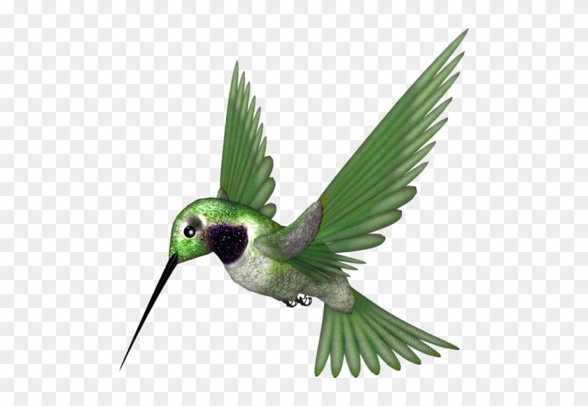 Klik For At Se I Normal Størrelse - Rufous Hummingbird #290914
