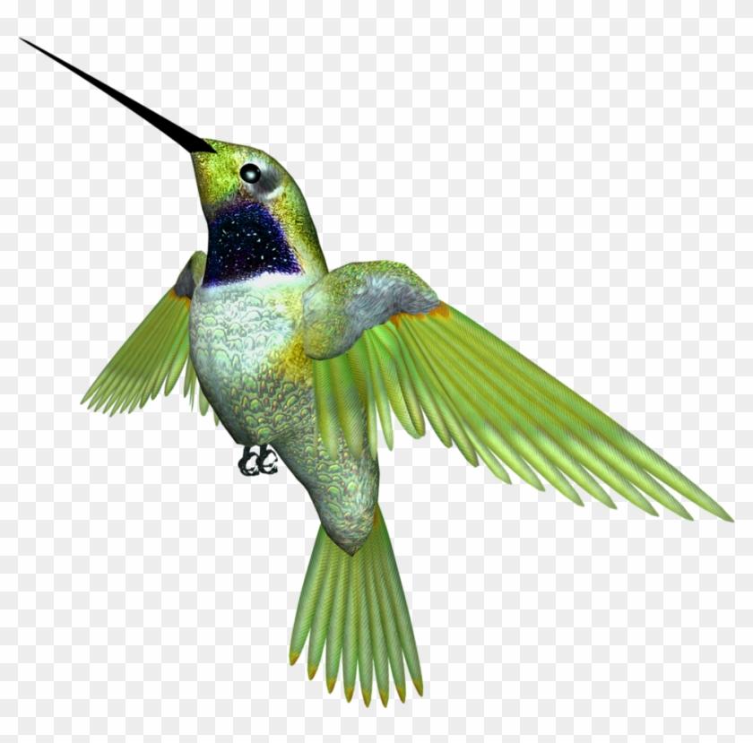 Hummingbird - Ruby-throated Hummingbird #290922