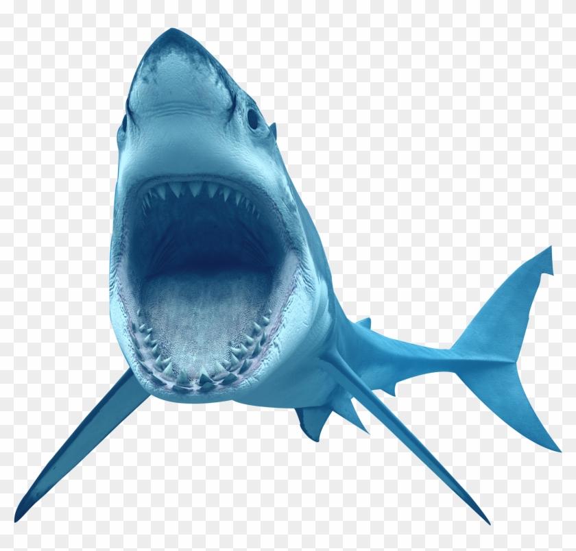 Animal Shark Transparent Image - Great White Shark Transparent Background #291041