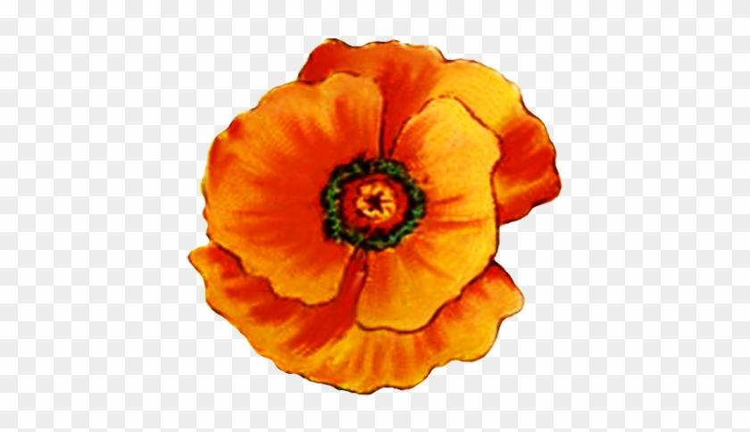 Head Of Poppy Flower - Orange Poppy Flower Clipart #291202