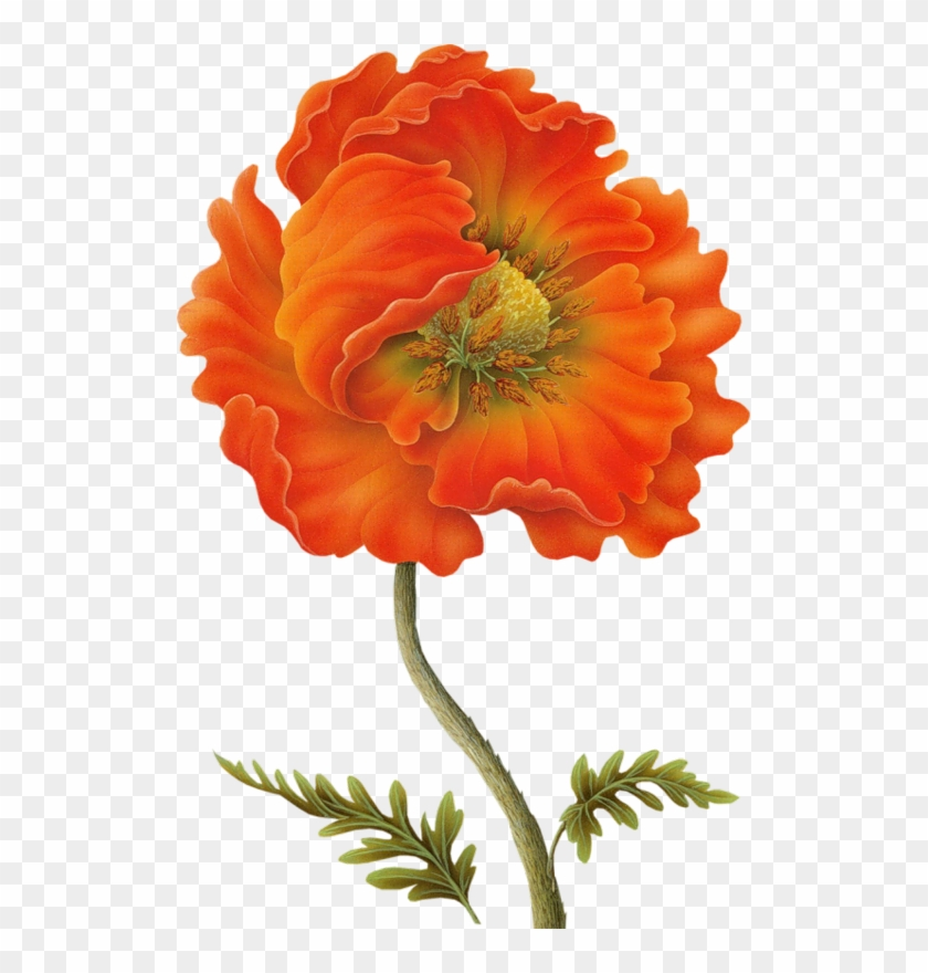 Яндекс - Фотки - Dibujos De Flores Naranja Para Decoupage #291239