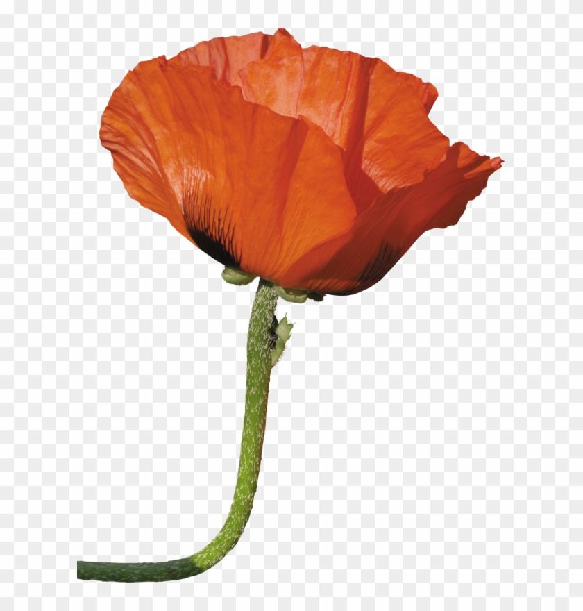 Paper Flower Poppy Clip Art - Paper Flower Poppy Clip Art #291302