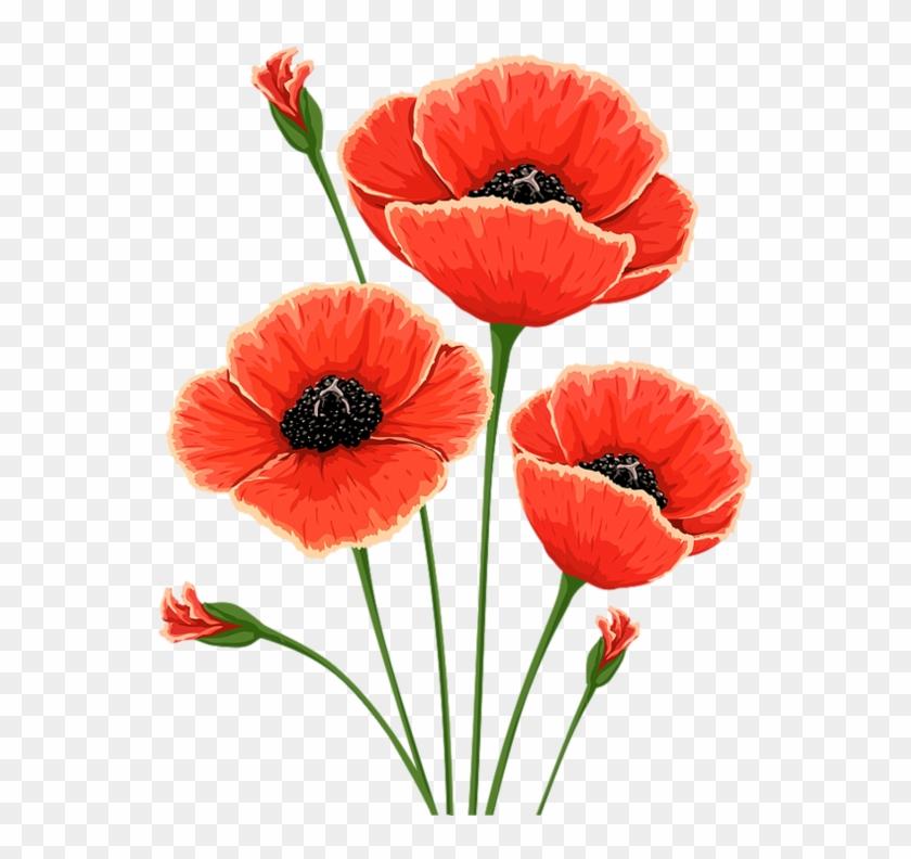 Common Poppy Flower Remembrance Poppy Clip Art - Common Poppy Flower Remembrance Poppy Clip Art #291373