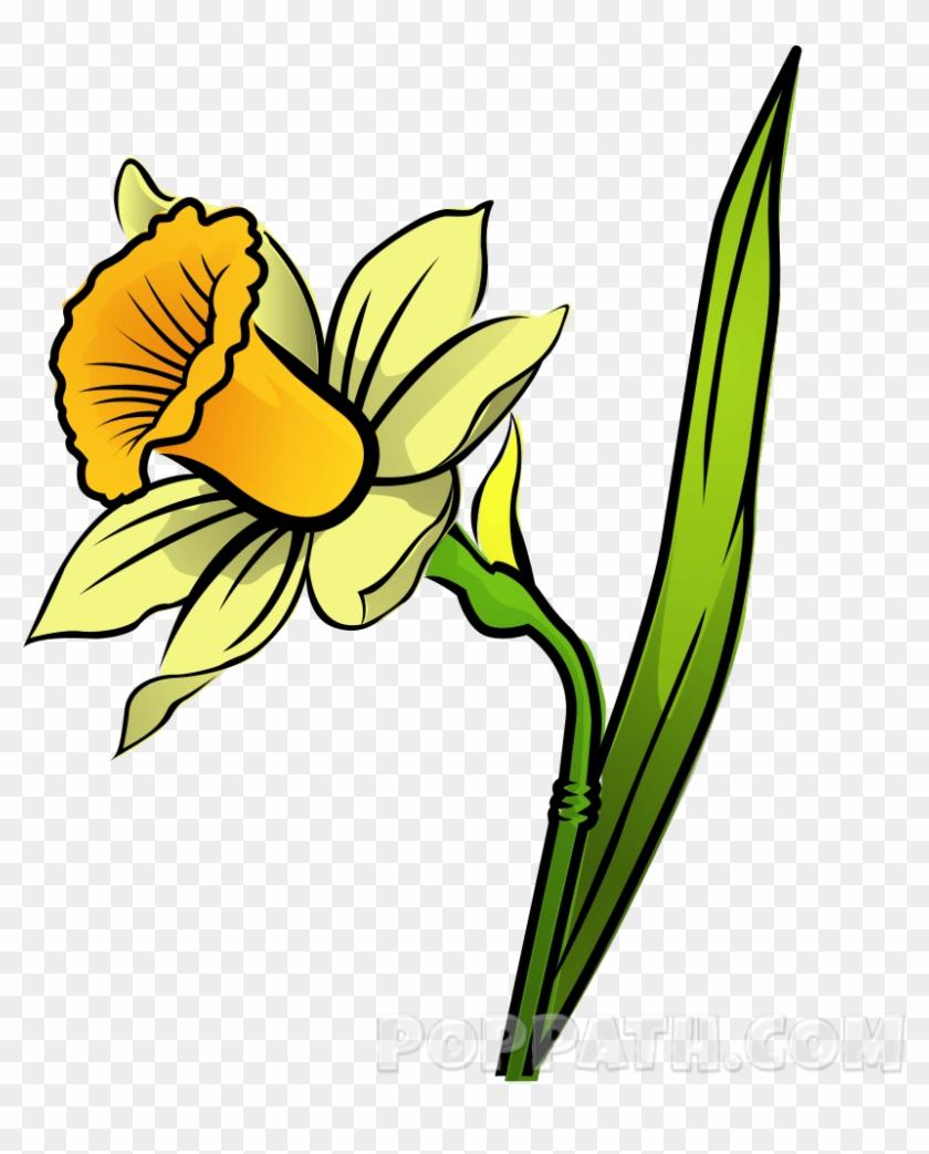 How To Draw A Daffodil Pop Path - Daffodil #291581