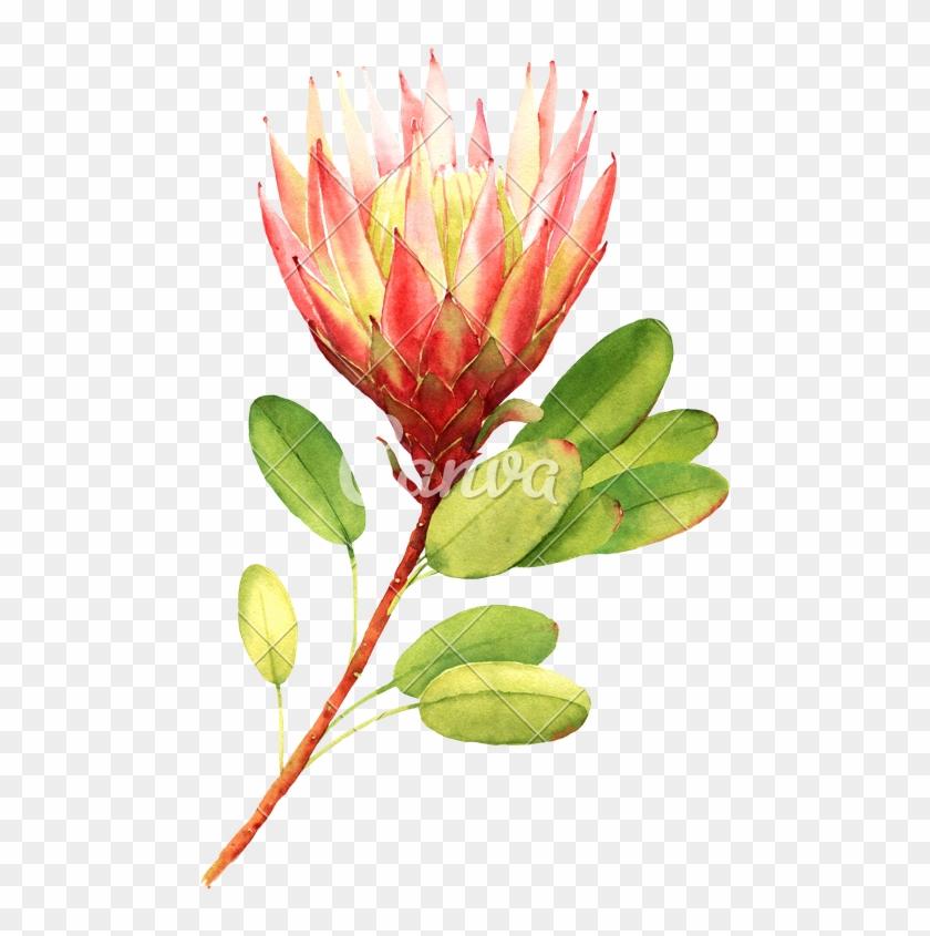 Exotic Flower - Illustration #291609