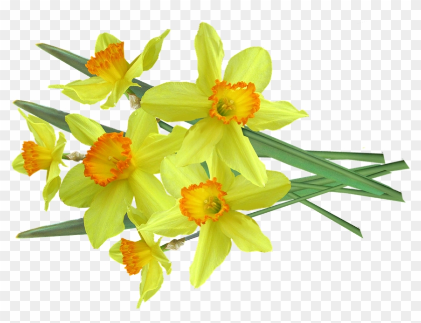 Daffodil Pictures 12, Buy Clip Art - Bouquet #291658