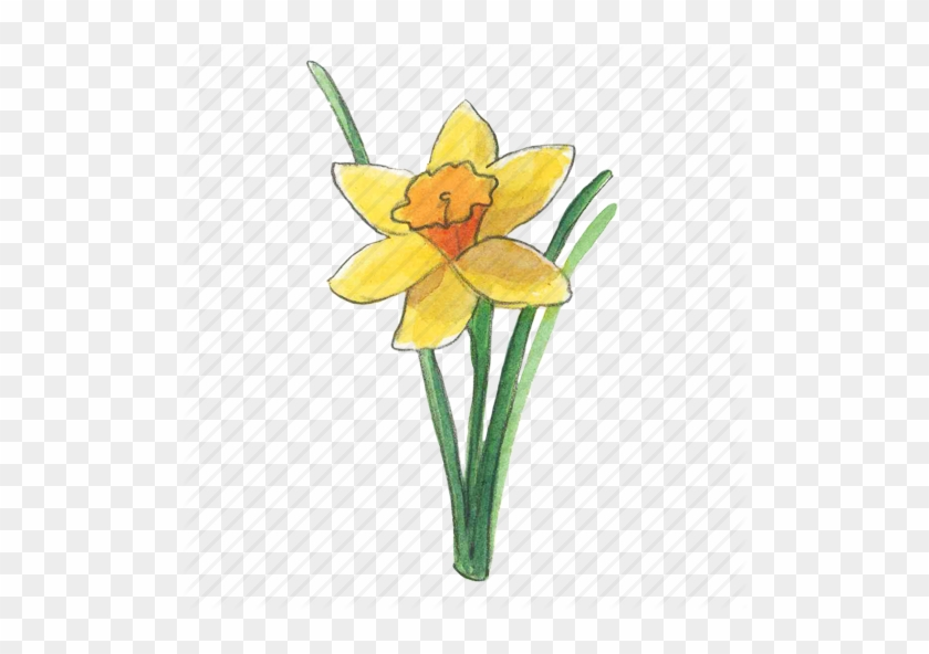 Daffodils Png Transparent Images - Daffodil #291701