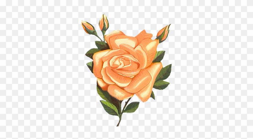 Vintage-rose Clipart - Vintage Orange Flower Transparent #291780