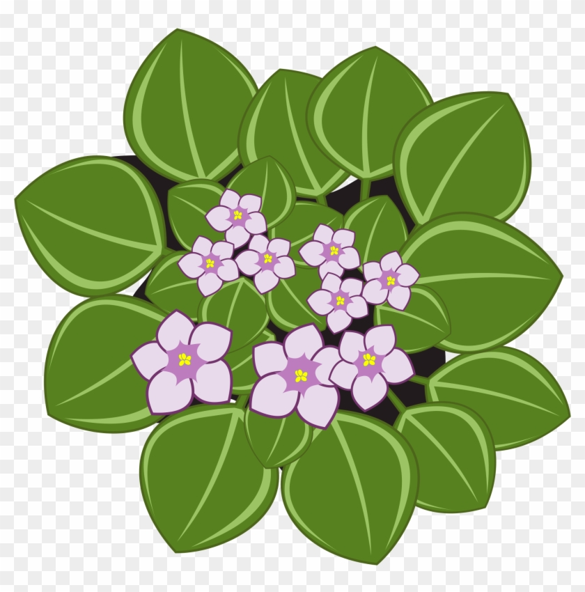 Clipart - African Violets #291806