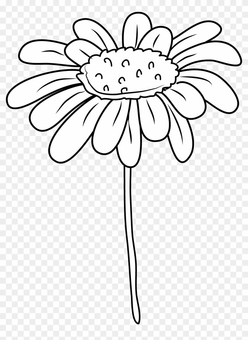 Daisy Flower Clipart Clip Art Free Transparent Png Clipart