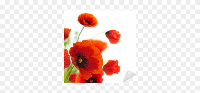 Floral Design, Decoration Flowers, Poppies Border - First Heating Wist Ng Infrarot-bildheizung 60 X 60 #292067