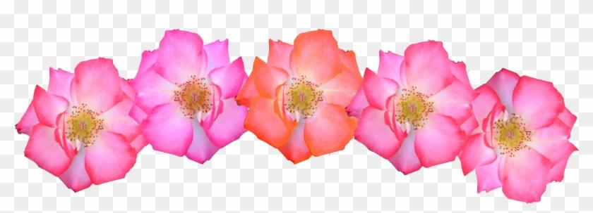 Pink Flowers Crown Png Image - Pink Flower Crown Png #292104