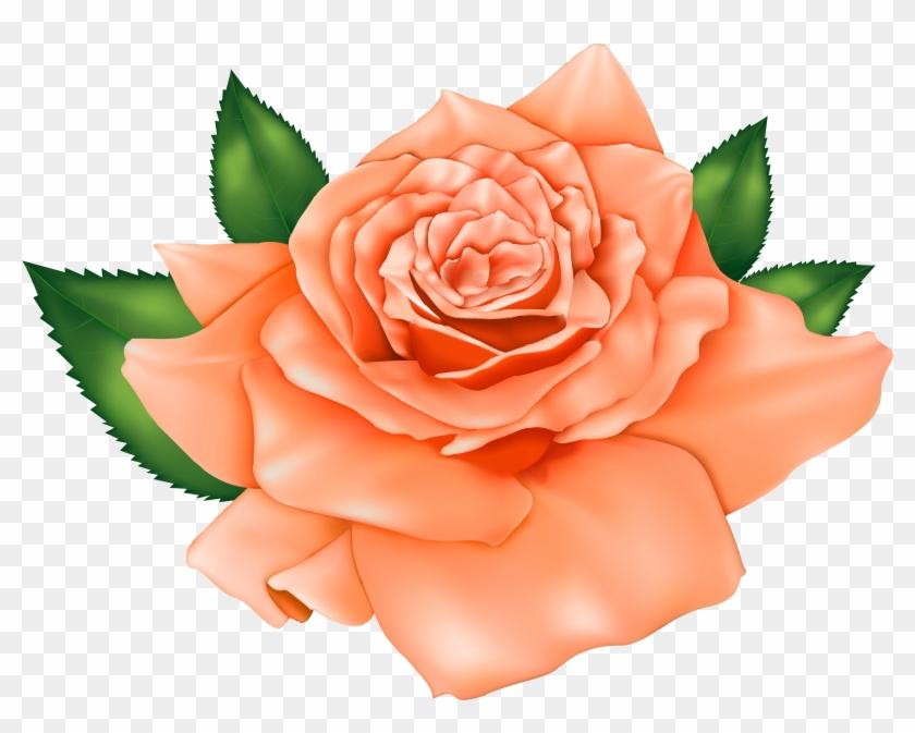 Orange Poppy Flowers - Orange Poppy Flowers #292142